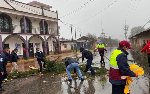 Muere un hombre en Puebla por 'Grace'; suman nueve víctimas - Árbol derribado en Puebla por paso de 'Grace'