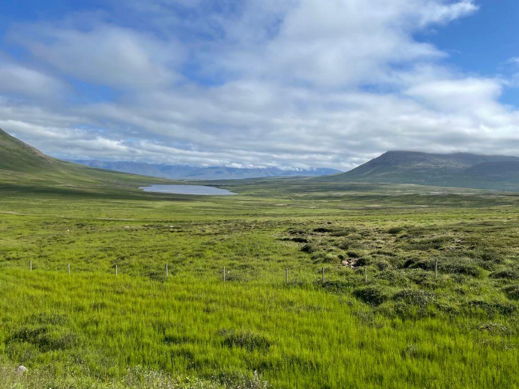 caballos en islandia.