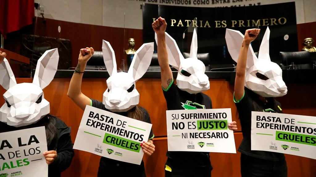 Piden al Senado prohibir experimentos con animales en la industria cosmética - Protesta en el Senado a favor de prohibir experimentos con animales en la industria cosmética