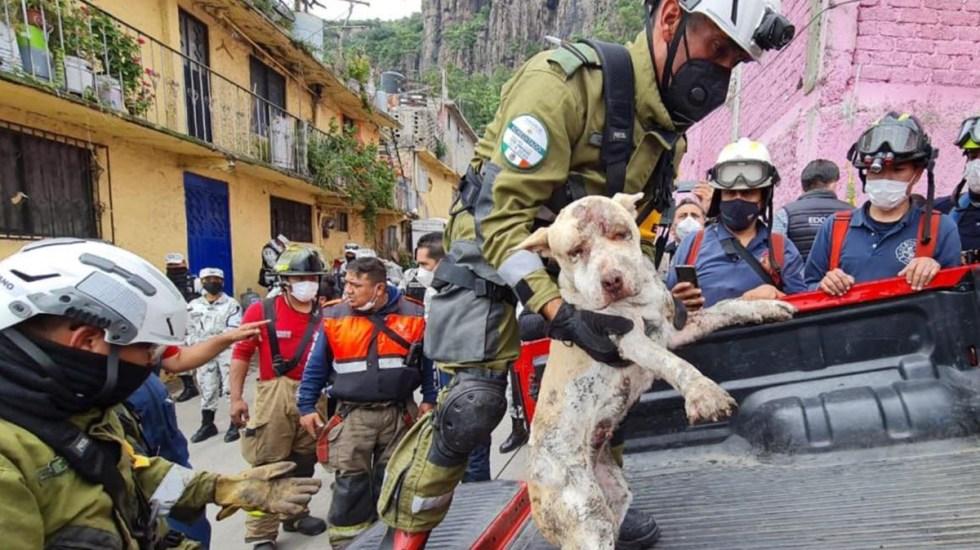 Rescatan con vida a perro del derrumbe en Cerro del Chiquihuite - Rescate de perro del derrumbe en Cerro del Chiquihuite