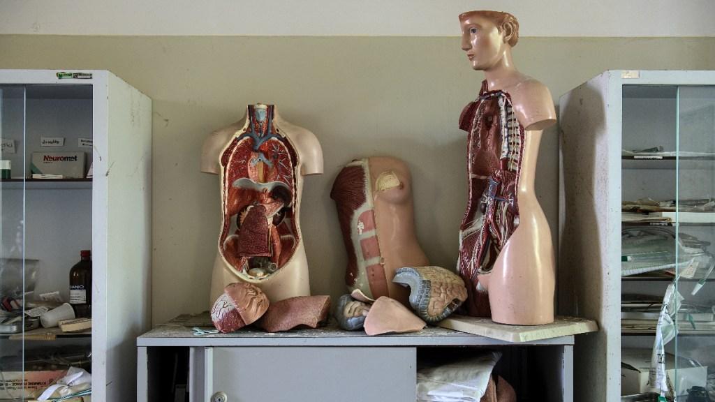 Hepatitis B lleva milenios infectando a los humanos - Hepatitis B