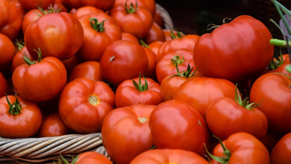 México vigilará prohibición de entrada de tomates frescos a EE.UU. - tomates