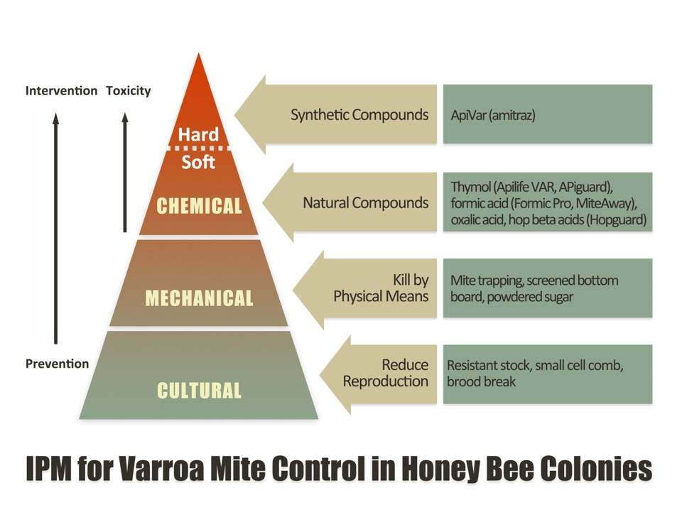 IPM tactics to manage varroa mites