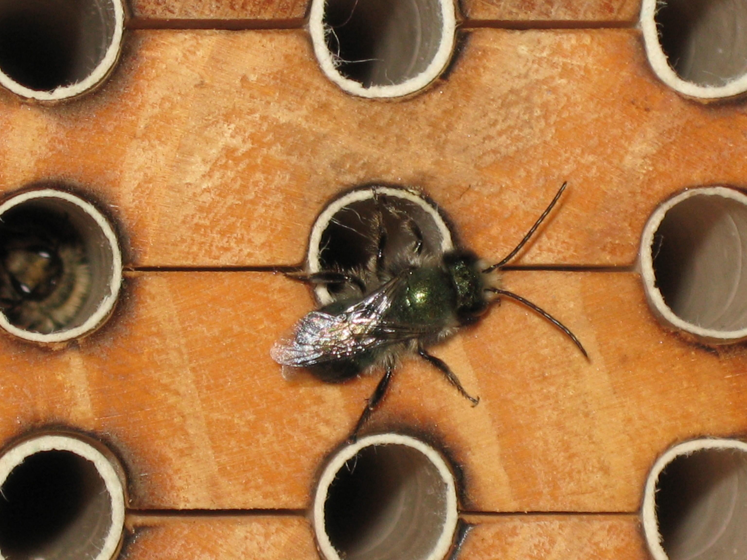 Pollinator Webinar Series – Summer 2020
