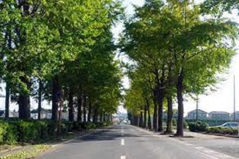 街路樹画像