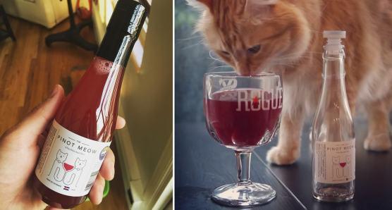 vin pour chat-9744844-15718990-min