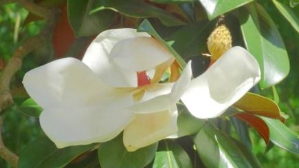 fleur-jardindesplantes-nantes-curiouscat-dsc05949-min