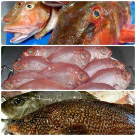 Pescados en Mugarra (fotos: Facebook)