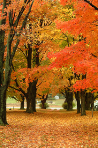 3 fall happiness tips