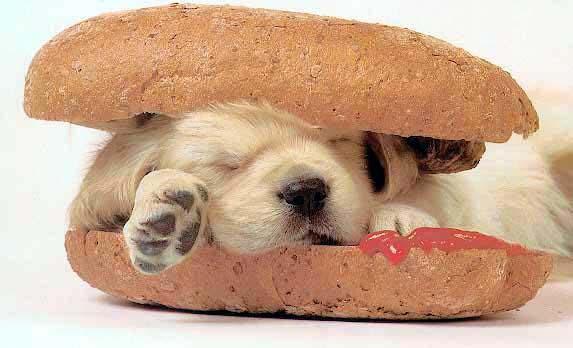 chien_sandwich