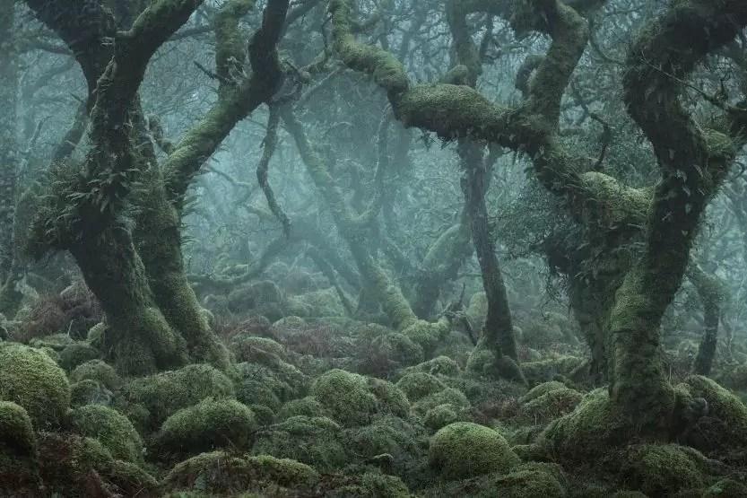 Brocéliande ou la forêt des légendes