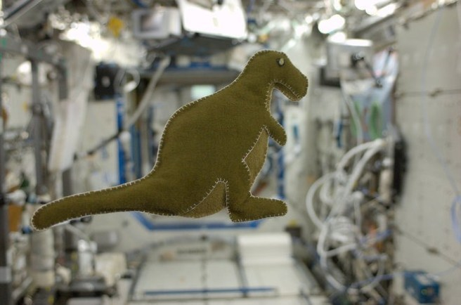 NASA astronaut Karen Nyberg's stuffed toy dinosaur floats on the International Space Station Credit NASA