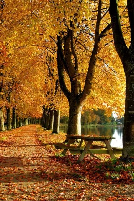 autumn-inspiration-zi-in-parc