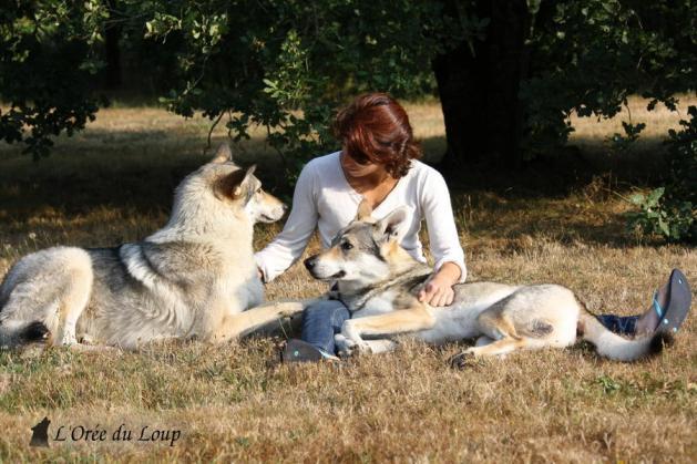 chien-loup-tchecoslovaque avec maitres