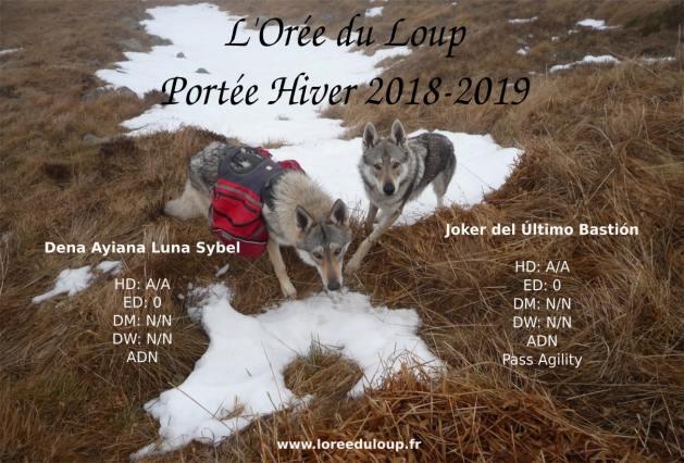 chiots chiens loups tchecoslovaques - Loiret - Orléans - pour janvier 2019