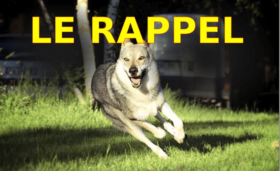 rappel_chien-loup