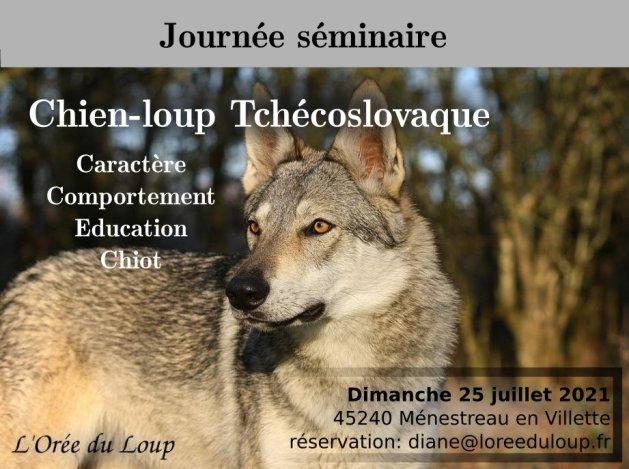 formation-chien-loup-tchécoslovaque