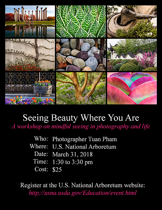Seeing Beauty Where You Are