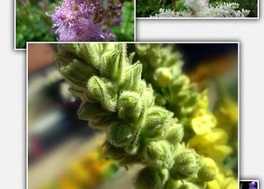Download 23 High Resolution Professional Flower Stock Photos - Premium Downloads Lorelei Web Design