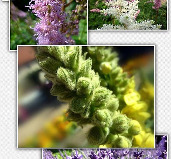 Download 23 High Resolution Professional Flower Stock Photos - Stock Images Lorelei Web Design