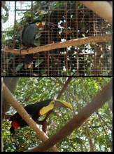 *montage-oiseau-low