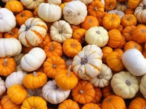 Rhoads_pumpkins_1572