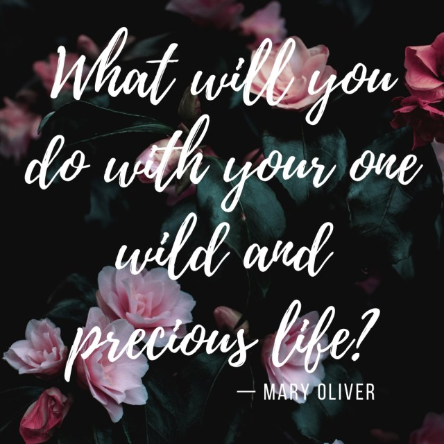 What will you do with your one wild and precious life_