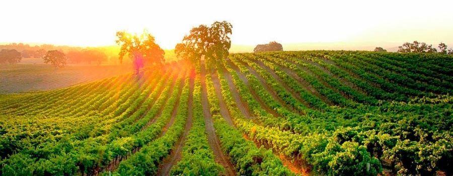 VIÑEDOS - Cómo utilizar el marketing digital en el sector del vino 🍷