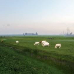 Hoogwatergeul - Werverdijk (8)