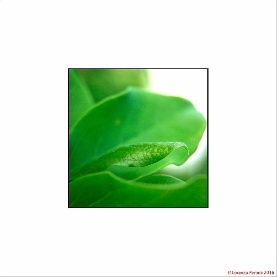 foglia_verde_40X40