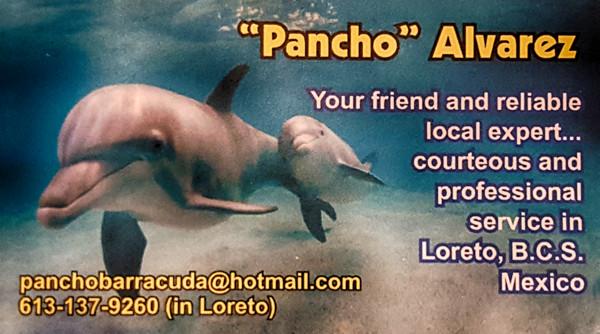 pancho-barracuda-back-600