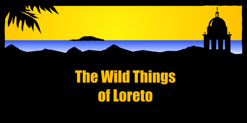 The Wild Things of Loreto