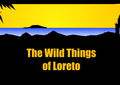 The Wild Things of Loreto