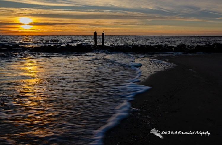 Sunrise over the jetty with two posts in water with gulls sitting on the posts at Buckroe Beach in Hampton, Virginia.