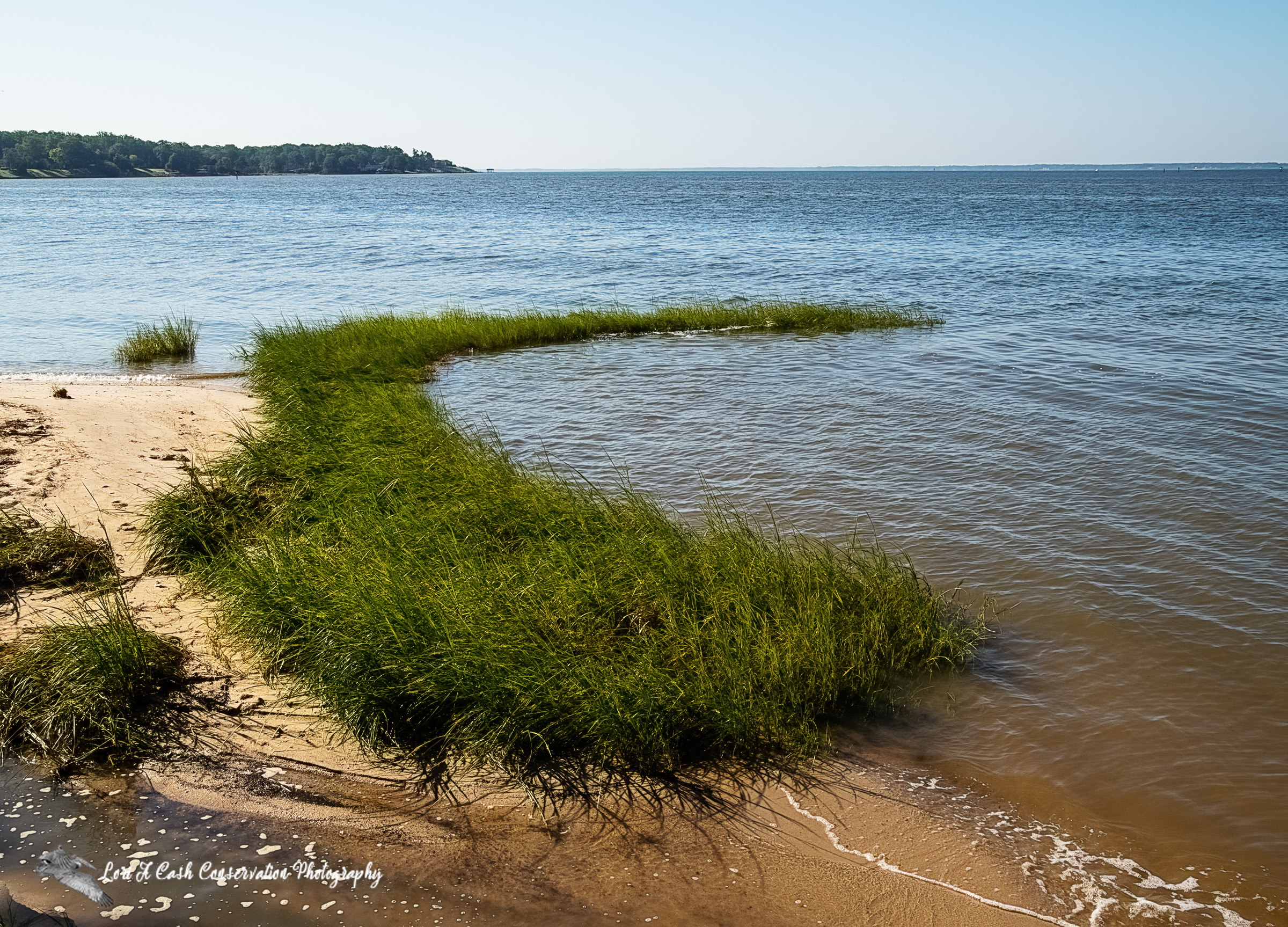 Beach area with grass on the shore with the view of the James River from the Riverview Farm Park in Newport News, Virginia.