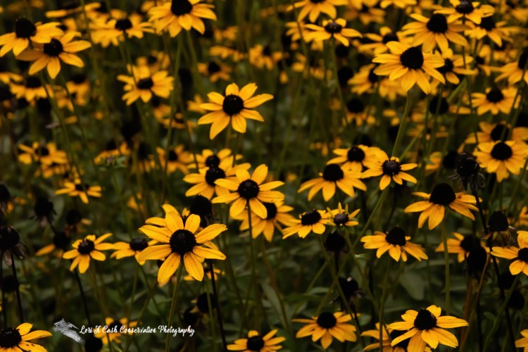 Nature Photo Gallery of Lori A Cash Conservation Photography.