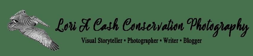 Lori A Cash Conservation Photography