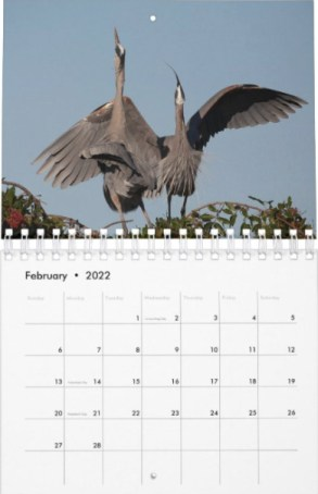 2022 Great Blue Heron Courting Displays Wall Calendar on Zazzle by Lori A Cash Conservation Photography