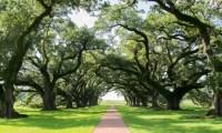 Ketamine turbo boosts brain compost to improve your mood like this oak grove.