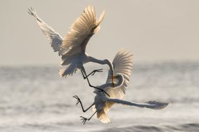 Fighting cranes depict the unexpected conflict from someone with bipolar disorder.