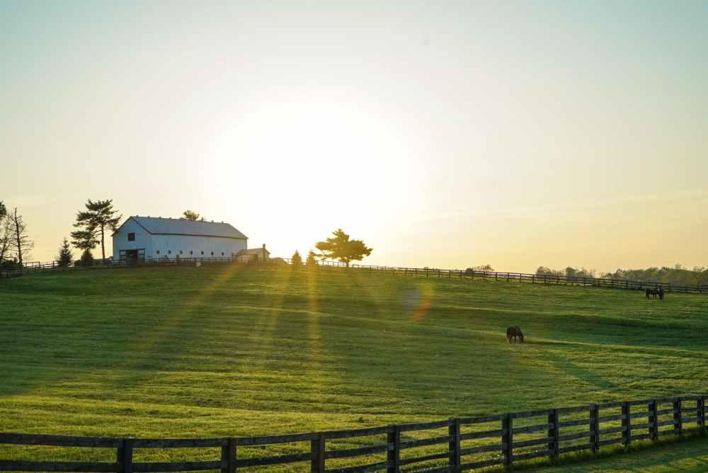 white house beside grass field