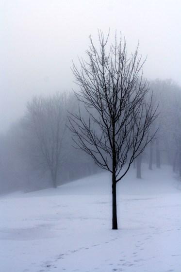 Stillwater Bridge, Dense Fog, Trees