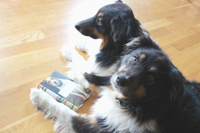 Ruby, Roxie, Australian Shepherd, Dog Stories, Everyman Classics