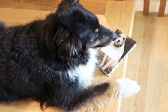Dog Stories, Everyman Classics