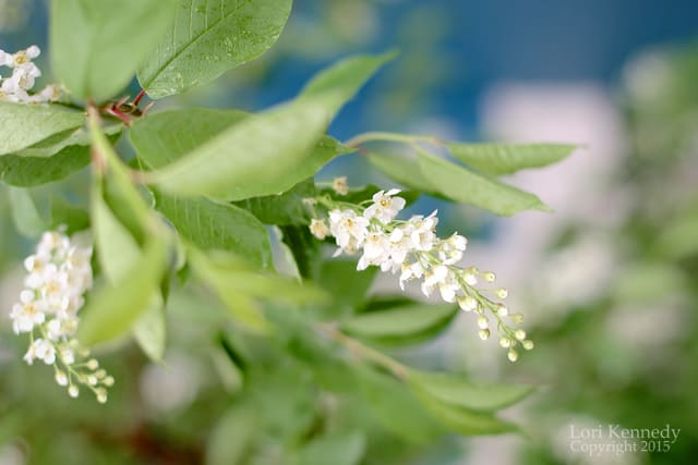 Flowers.Buds.LKennedy