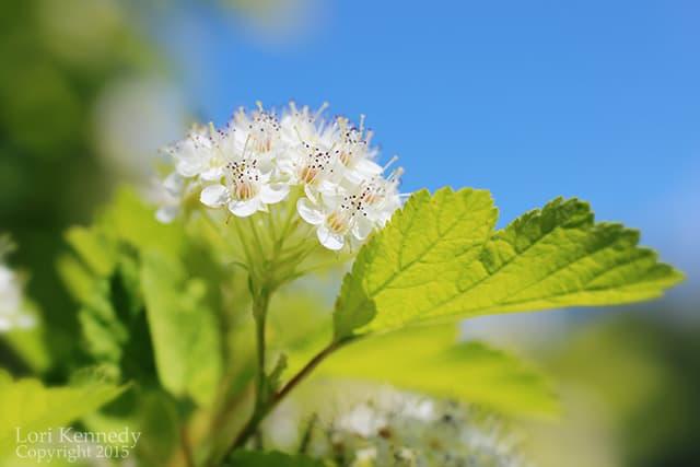 Garden, Blue Sky