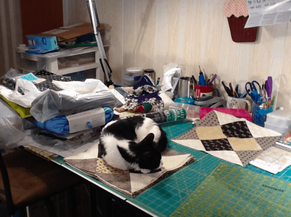 Max and Cindy's Cat, and Sewing Supervisor, Blanchie Green Bay, Wisconsin