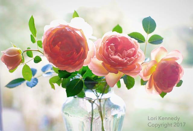 Lady of Shallot Rose