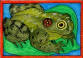 Frog - Card #RTKbd96 $4