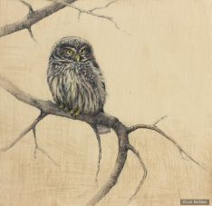 ©2012 Lori McNee Little Owl 12x12 Graphite on panel